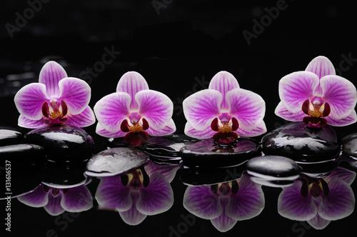 martwa-natura-z-czarnymi-kamieniami-i-wspaniala-orchidea