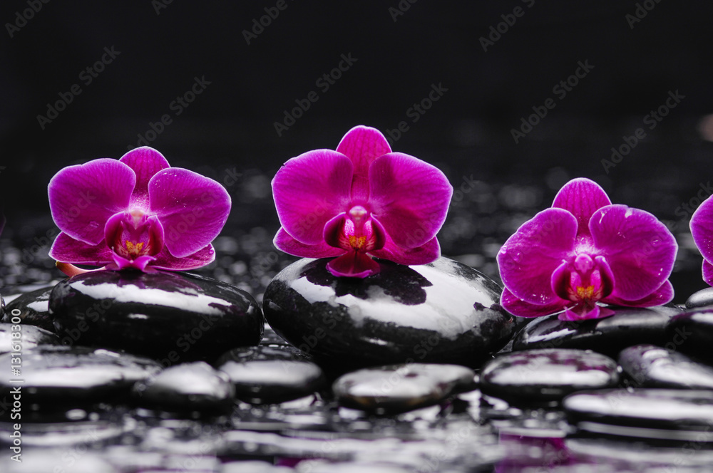still life with red orchid and black stones