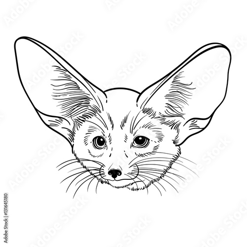 Cute Animal Little Fox Fennec Children Linear Illustration For Coloring Book To Print