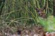 Hirsch ruht im Dickicht des Nationalparks De Hoge Veluwe