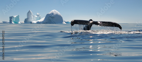 Foto auf Gartenposter Antarktika Beautiful view of icebergs and whale in Antarctica