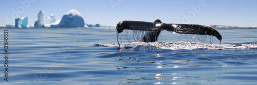 Poster Antarctica Beautiful view of icebergs and whale in Antarctica