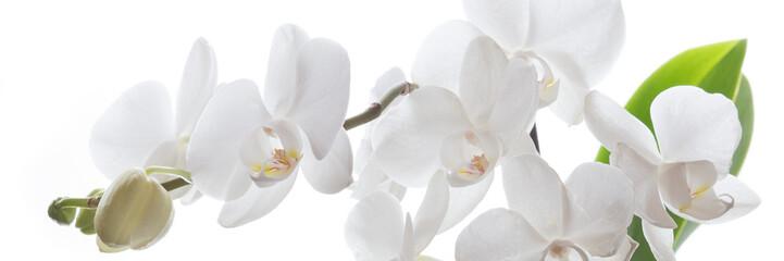 NaklejkaWeiße Orchidee isoliert