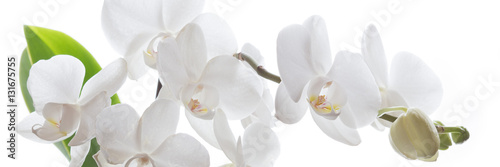Recess Fitting Orchid Weiße Orchidee isoliert - Banner