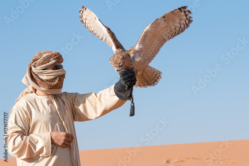 Young male pharaoh eagle owl (bubo ascalaphus) during a desert falconry show in Dubai, UAE.