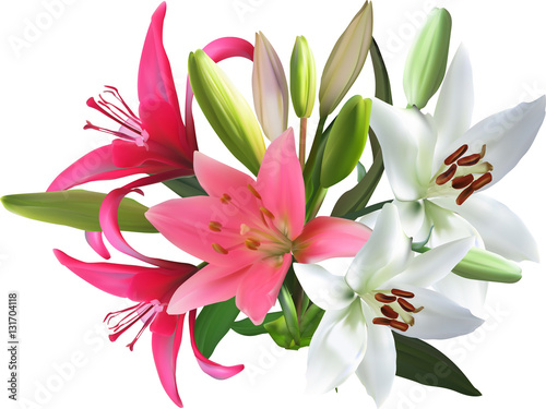 Carta da parati pink and white isolated bunch of lily flowers
