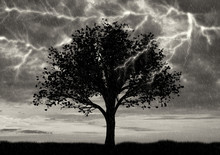 Lonely Tree In Thunderstorm An...