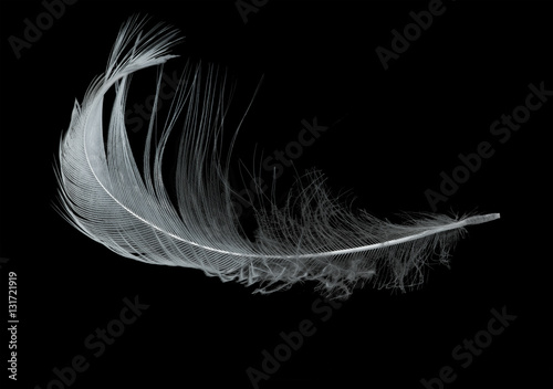 isolated on black single light feather