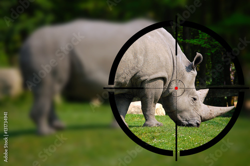 Fotobehang Jacht Big game hunting - White rhino in the rifle sight
