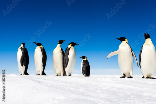 Tuinposter Pinguin Group of cute Emperor penguins on ice