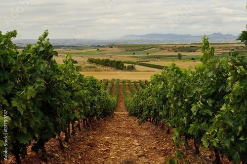 Viñedo en Zarratón, La Rioja