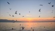Seagulls flying and swimming on the sea at sunset.