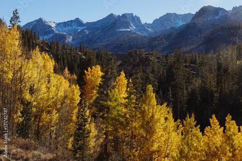 Fototapety, obrazy: Eastern Sierra Foliage