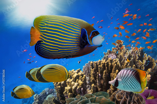 Láminas  Coral Reef and Tropical Fish in Sunlight