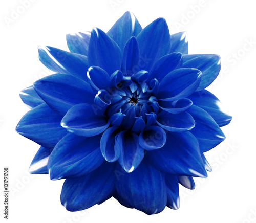 Poster de jardin Dahlia Flower blue motley dahlia. Isolated on a white background. Close-up. without shadows. For design.