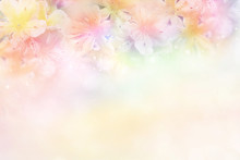 Beautiful Flower Soft Background In Pastel Tone For Valentine Or Wedding
