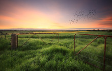 Rusty Gates Open To Wheat And ...