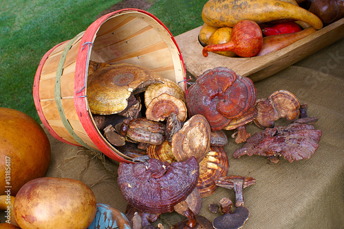 Photo  Basket of Fungi and Assorted Gourds