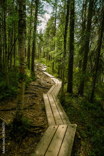 lesna-drozka