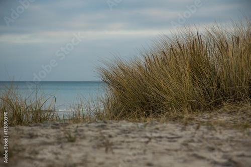 Prora auf Rügen direkt am Ostseestrand mit Dünengras © magentapix