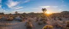Joshua Tree Sunrise Along A Tr...