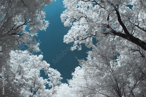 Photo  Infrared landscape and details