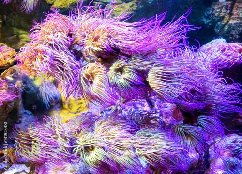 Staande foto Koraalriffen underwater image of colorful tropical plants in London aquarium