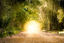 Road Through Bamboo Forest And Light End The End Of Tunnel - Concept