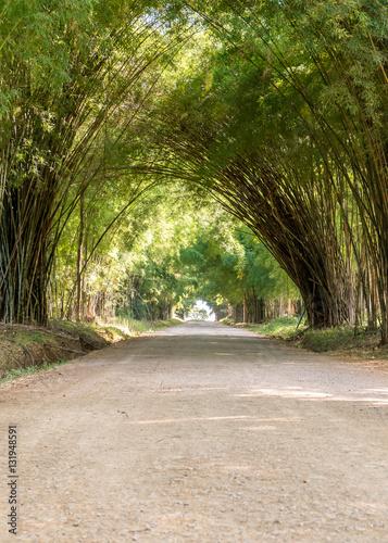 Plakat droga przez tunel lasu bambusowego drzewa