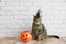 Cute Tabby Cat With Witch Hat And Halloween Lantern Near Brick Wall