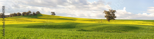 Photo Stands Melon Agricultural fields of canola and pastures in springtime