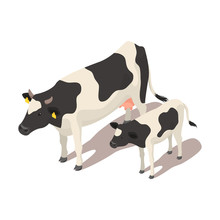 Isometric Small And Big Cow.