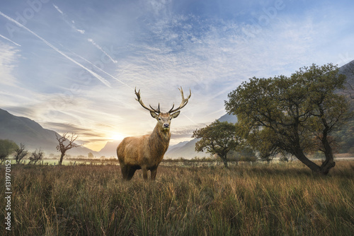 potezny-jeleni-jelen-w-krajobrazie-wiejskim-scena-szuka-ou