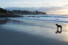Carmel Beach Dog