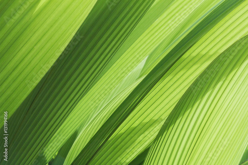 Fotografía  greenery background abstract palm leaf