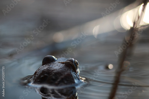 Tuinposter Kikker frog head back in water