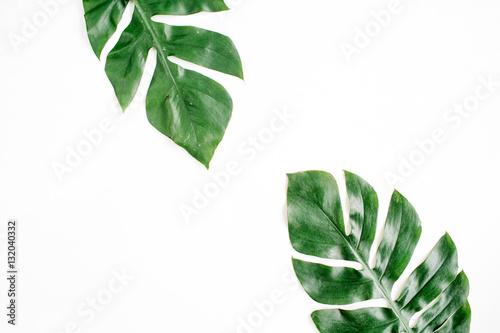 Obraz na plátne Tropical palm leaves. Flat lay, top view