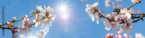 Foto op Plexiglas Kersen Glückwunsch, alles Liebe: Verträumte Kirschblüten vor blauem Frühlingshimmel :)
