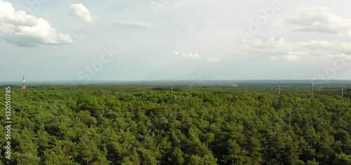 Forest - 132050785