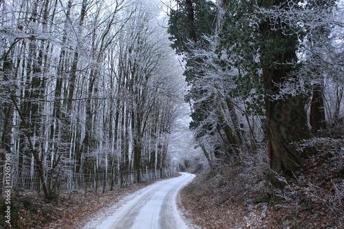 Weg im Wald mit Gefrorenen Bäumen im Winter Canvas-taulu
