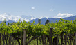Andes and Mendoza Vineyard.