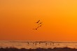 Pelicans flying over Pacific during colorful sunset