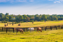 Horses At Horse Farm. Country ...