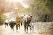 canvas print picture Africa Safari Animals Walking Down Path