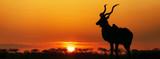 Fototapeta Sawanna - South Africa Sunset Kudu Silhouette
