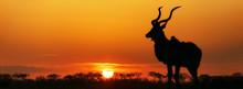 South Africa Sunset Kudu Silho...