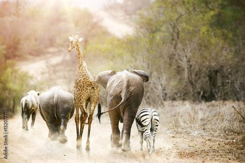 Africa Safari Animals Walking Down Path Poster