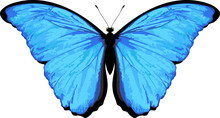 Vector Butterfly Isolated On W...