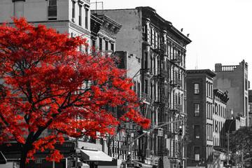 FototapetaRed Tree on Black and White New York City Street