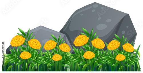 Deurstickers Groene Marigold flowers in the garden